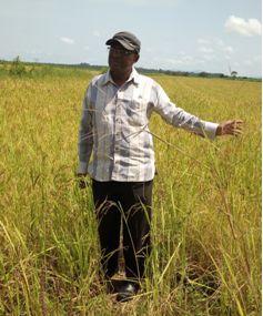 Tonkolili takes the lead on agriculture productivity thumbnail